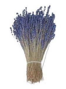 lavender dried